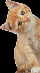 contact-cat